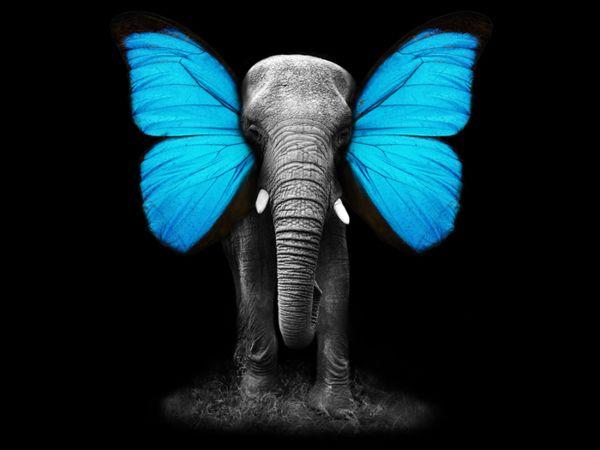 Elephant-Butterfly