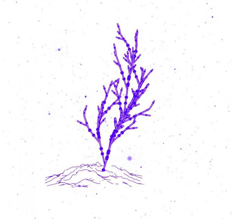Animated-Tree-Growth